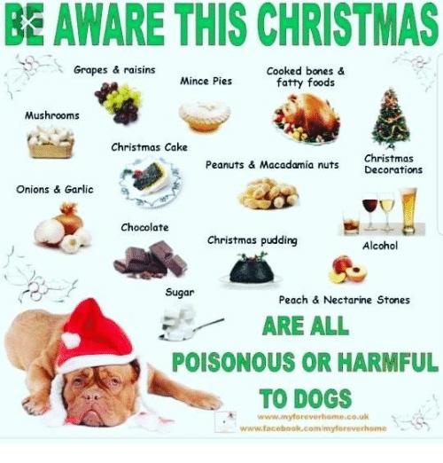 be-aware-this-christmas-grapes-raisins-cooked-bones-38039446